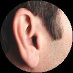 Roblox Wisteria - Shop Item Enhanced Ears